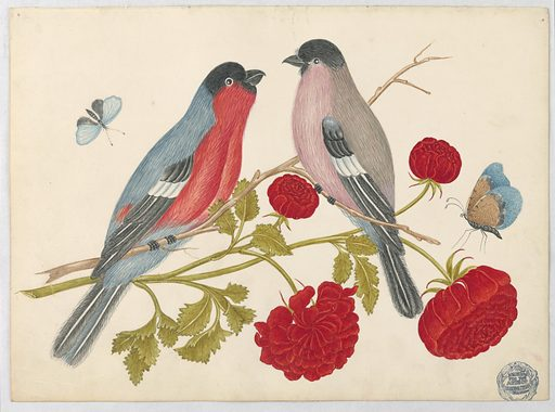 Pair of Birds on Branch with Roses and Butterflies. Date: 1800s. Record ID: chndm_1923-22-26.