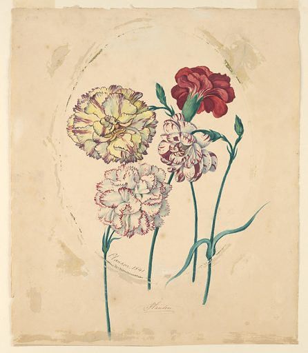 Four carnations