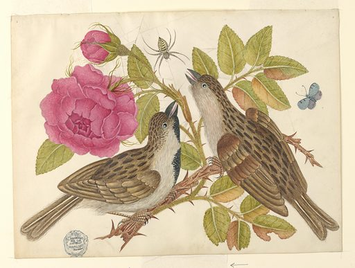 Pair of Brown Birds on Rose Stem with Butterfly and Spider. Date: 1800s. Record ID: chndm_1923-22-31.