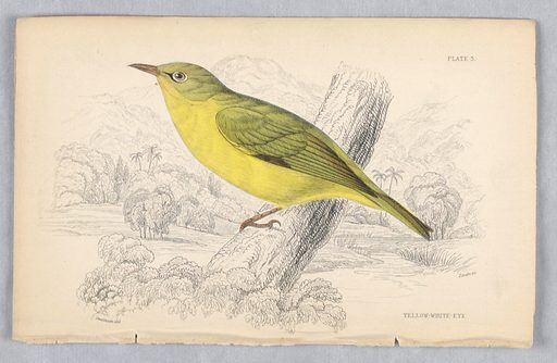 Bird with green back, wings, and tail and a yellow underside perched on a tree trunk. A river, meadows and mountains, beyond. Title and artists' names below. Print maker: William Home Lizars, Scottish, 1788 – 1859. Made in: Edinburgh, Scotland. Date: 1830s. Record ID: chndm_1961-105-161.
