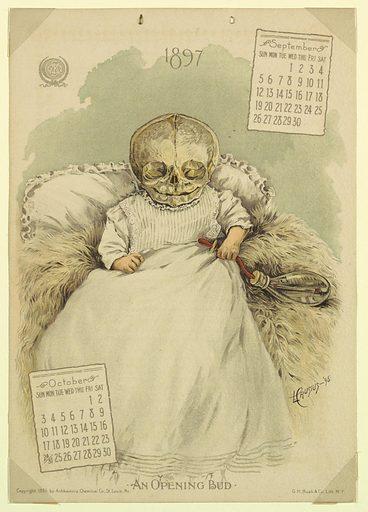 The Antikamnia Calendar, September and October, 1897: An Opening Bud