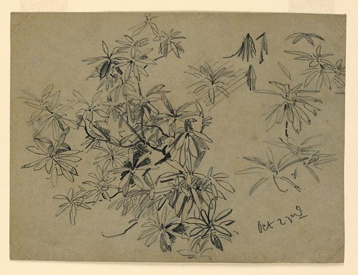 Sketch of a tree with foliage. Made in: USA. Date: 1860s. Record ID: chndm_1953-179-25.