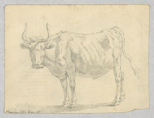 View of a cow facing left. Made in: Italy. Date: 1800s. Record ID: chndm_1901-39-506.