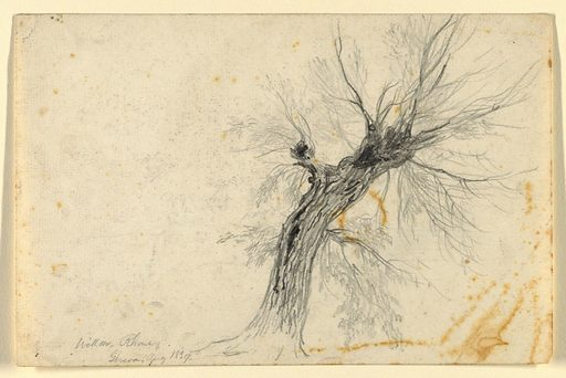 Study of a willow tree, nearly leafless, leaning towards the right. Made in: Geneva, Switzerland. Date: 1830s. Record ID: chndm_1942-50-17.