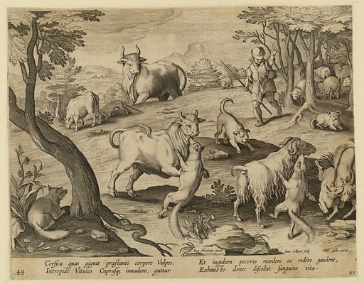 """Horizontal rectangle. In the foreground, foxes attack sheep and a bull. A shepherd and his dog run toward the scene, upper right. Flock of sheep, in background, right. Center: """"Ioan. Stradanus invent.""""; at lower right: """"Ioan. Collaert Sculp. Phls Galle excud."""" Below: """"CORSICA GUAS QIGNIT PRAE STANTI."""". Made in: Netherlands. Date: 1600s. Record ID: chndm_1952-37-18."""