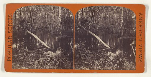 View in Silver Spring Run. [on the Ocklawaha River, Florida]. Date: about 1869. Culture: American. Object number: 84.XC.979.1539.