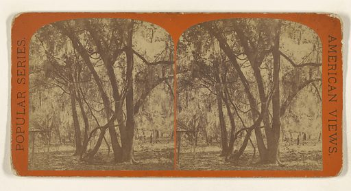 Tocoi. Wild Grape Vines. [on the St Johns River, Florida]. Date: about 1869. Culture: American. Object number: 84.XC.979.1541.