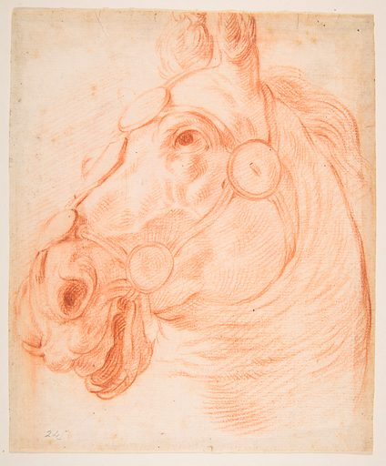 Study for a Horse's Head (ca. 1650). Accession number: 57.658.91.
