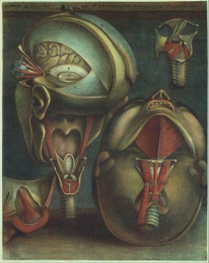 Myologie Complette en Couleur et Grandeur Naturelle (1746). Accession number: 28.52.2.