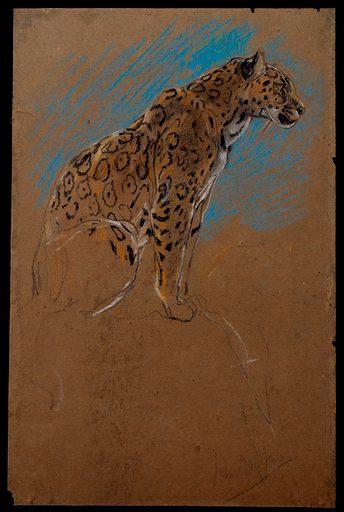 Study of a Jaguar (1874–1910). Accession number: 59.23.80.