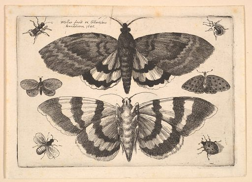 Two moths and six Insects (1645). Accession number: 26.72.121.
