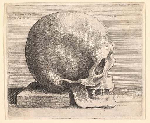 Skull in profile to right (1645). Accession number: 17.50.18-101.