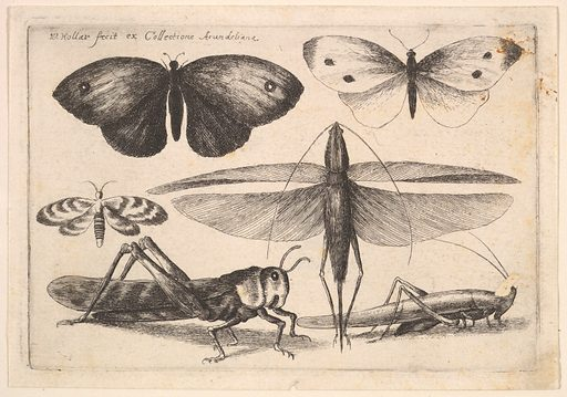 Six insects (1646). Accession number: 26.72.115.