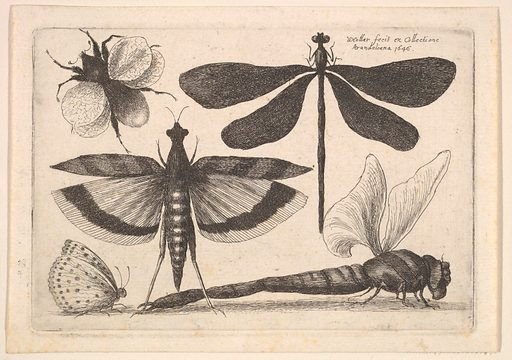 Dragonflies and a bumble bee (1646). Accession number: 26.72.119.