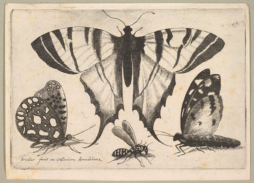 Three Butterflies and a Wasp (1646). Accession number: 26.72.120.