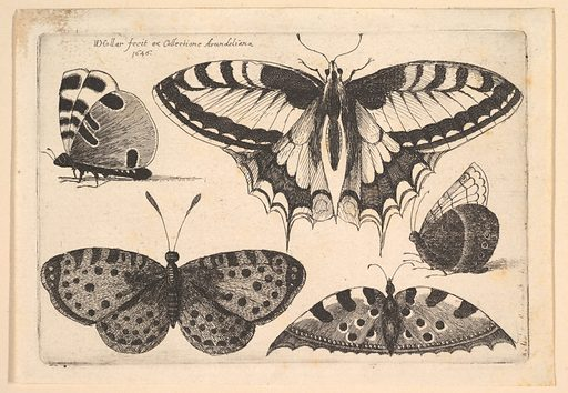 Five Butterflies (1646). Accession number: 26.72.125.