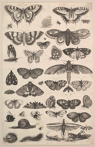 Forty-one Insects, including moths and butterflies (1625–77). Accession number: 26.72.126.