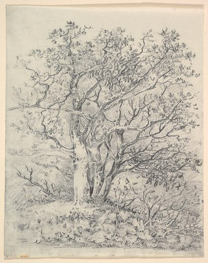 Study for Three Trees (January 12, 1812). Accession number: 26.70.2.