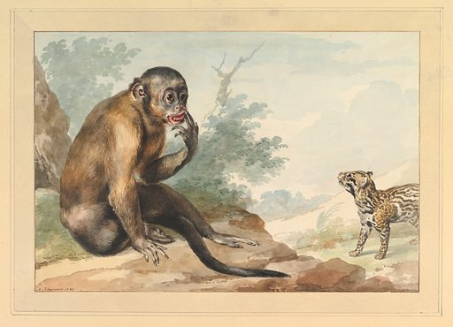 A Monkey Sitting on a Rock Looking at a Civet (1764). Accession number: 2004.296.