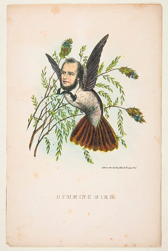 Humming Bird (Thomas B Florence), from The Comic Natural History of the Human Race