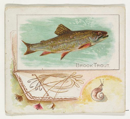 Brook Trout, from Fish from American Waters series for Allen & Ginter Cigarettes