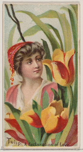 Tulip: A Declaration of Love, from the series Floral Beauties and Language of Flowers for Duke brand cigarettes