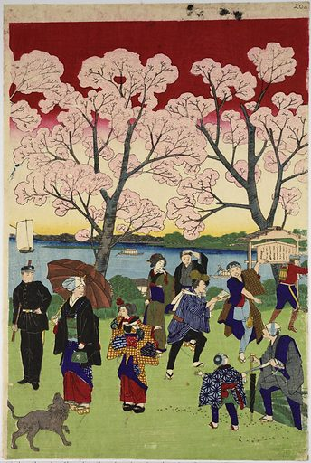 The most beautiful scene of the famous places in Tokyo, The cherry blossoms on the banks of the Sumida River