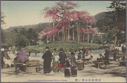 Cherry blossom Maruyama Park at Kyoto