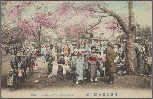 Cherry blossom at Uyeno Park, Tokyo
