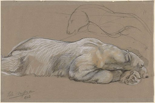 Drawing living animals requires the patience of a saint. The British artist Johan Macallan Swan could wait hours for the animal to assume the desired pose. The second it did, he would dash off a quick sketch before the animal moved again. This polar bear, however, must have stayed still for some time. The artist was able to accurately study its thick coat. Date: 1903. Object ID: SK-A-3713.