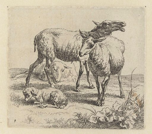 Bleating sheep between two sheep and a lamb. Origin: Netherlands. Date: 1646 – 1652. Object ID: RP-P-BI-988.