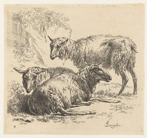 Two lying sheep and a standing sheep. Origin: Netherlands. Date: 1646 – 1652. Object ID: RP-P-BI-993.