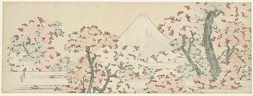 Fuji and cherry blossom