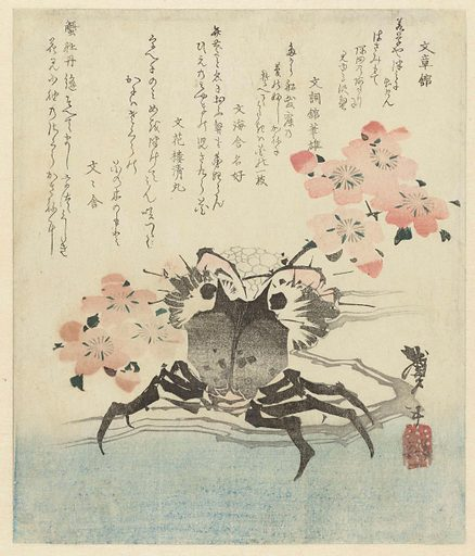 Crab with cherry blossom