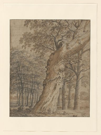 Old oak in a forest