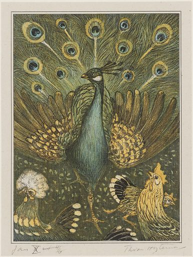Peacock with chickens