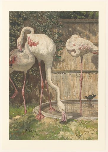 August Allebé produced this worked-up drawing on the basis of sketches he had made on the spot in the zoo. He used a surprising palette of bright and natural colours. In his early work he favoured dark brown and red tints. Perhaps this change was brought about by all of the drawing he did out of doors. Date: 1872. Object ID: RP-T-1971-98.