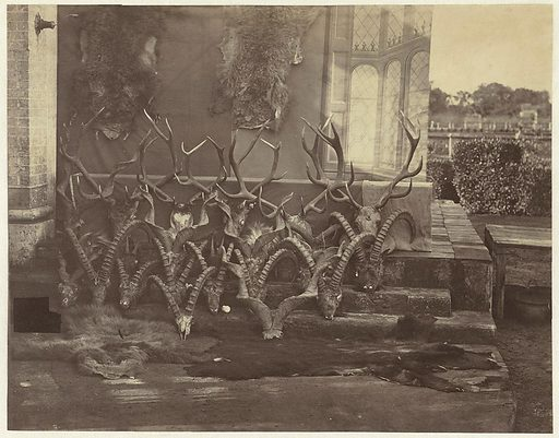 Hunting trophies from antlers and skins