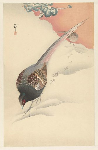 Pheasant couple in the snow