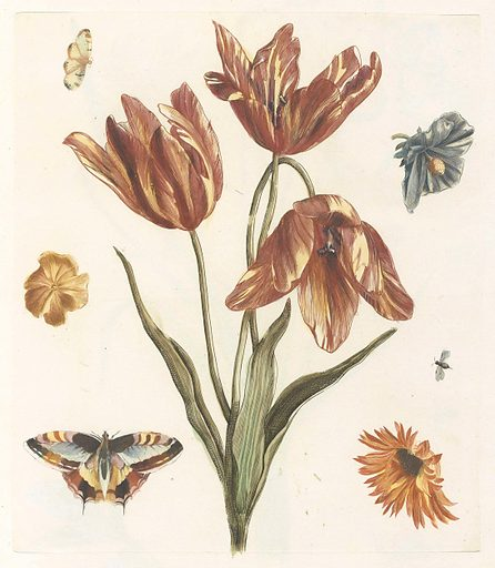 Tulips, other flowers, butterflies and a fly