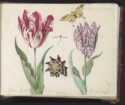Two tulips with shell, dragonfly and butterfly