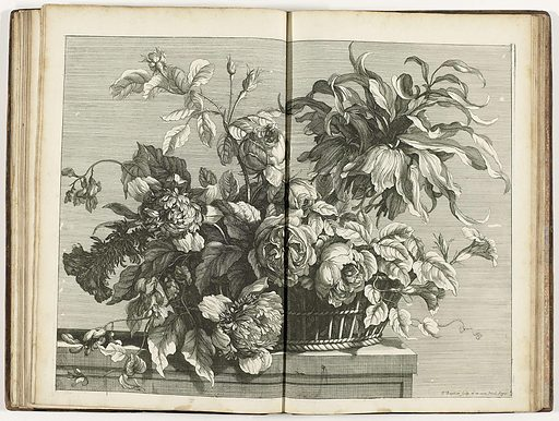 Monnoyer was the most famous painter of still lifes of flowers and fruit in 17th-century France. His clients even included King Louis XIV. He also executed his designs in prints, often in impressively large formats. Published in albums, these prints certainly added greatly to the popularity of his work among a broad public. Origin: Paris. Date: c 1680 – c 1695. Object ID: RP-P-2011-65-12.
