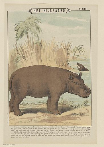 The hippo. Date: 1894 – 1959. Object ID: RP-P-OB-203.698.