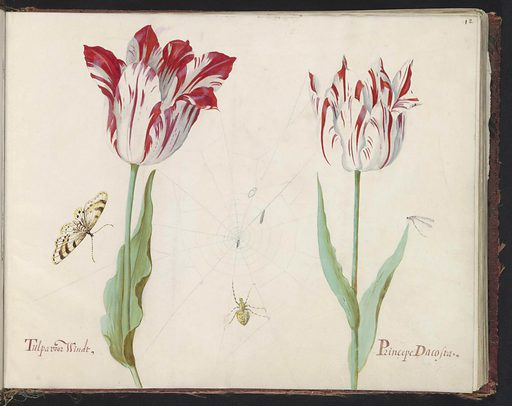 Two tulips with butterfly, fly and spider web
