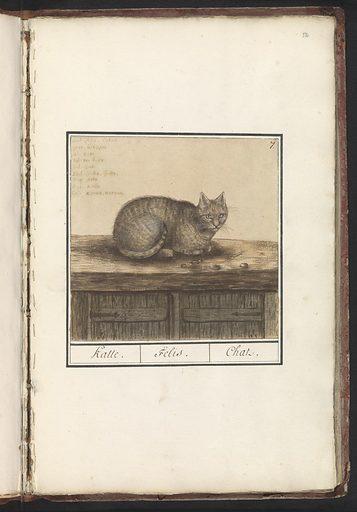 Kat (Felis catus). Origin: Delft. Date: 1596 – 1610. Object ID: RP-T-BR-2017-1-1-52.