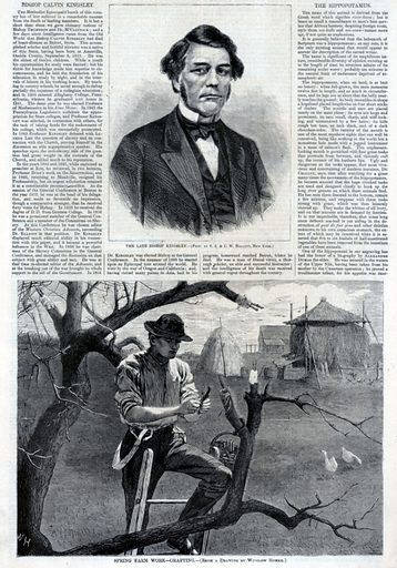 Spring Farm Work--Grafting, from Harper's Weekly, April 30, 1870. Sitter: Calvin Kingsley. Date: 1870s. Record ID: saam_1996.63.75.