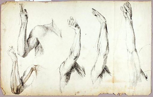 Arm Studies, #2. Date: 1890s. Record ID: saam_1971.446.98.