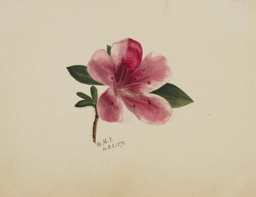 (Untitled--Flower Study). Date: 1870s. Record ID: saam_1970.355.802.