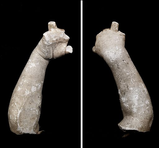Cast of an Unidentified Baby's Right Hand and Forearm (all fingers missing). Date: 1800s. Record ID: saam_1968.155.164.