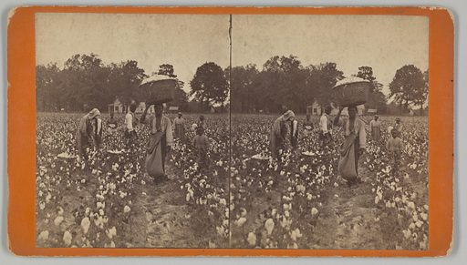 An untitled stereograph printed by JN Wilson of Savannah, Georgia. The albumen prints depicts a group of eight (8) people clustered near each other in a cotton field. The men, women, and children are all picking cotton or looking away from the camera except for a young man in the center foreground who stands and looks into the lens with a large picking sack hanging down on his right front side and his right hand balancing a full basket of cotton bolls on his head. A large white building can be seen in the far center background with smaller buildings around it amongst a grove of trees. The prints are mounted on card stock that is orange on the front and light pink on the reverse. Black text printed on the reverse lists the photographer's name and address. Date: 1920s. Record ID: nmaahc_2016.166.8.